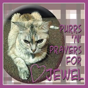 Purrs and Prayers for Jewel