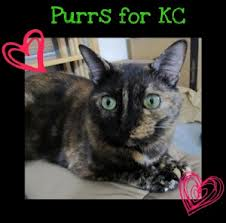 Purrs for KC
